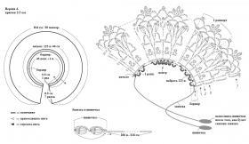 Ажурные воротнички - Схема 1