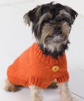 Оранжевый свитер для собаки